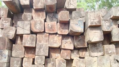 Cách nhận biết một số loại gỗ