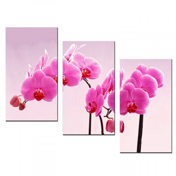 Tranh hoa lan tím